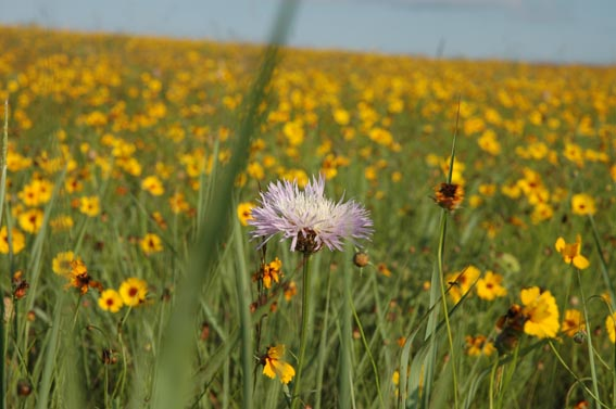 Wildflowers in field at McKnight Ranch